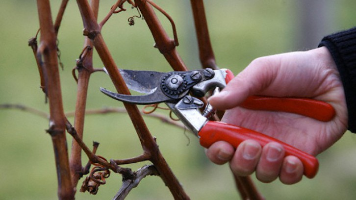 Pruning with us
